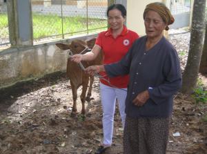 Hội Chữ thập đỏ huyện Châu Thành (tỉnh Tây Ninh): Trao bò cho hộ nghèo xã biên giới