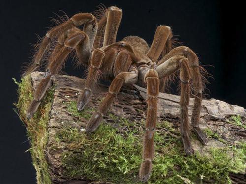5 cách tự nhiên đuổi nhện ra khỏi nhà