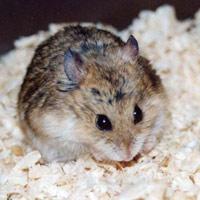 5 cách đơn giản mà hiệu quả đuổi chuột khỏi nhà
