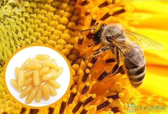 Sữa ong chúa giá bao nhiêu?