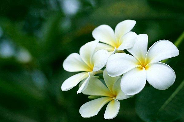 các loài hoa đẹp 10