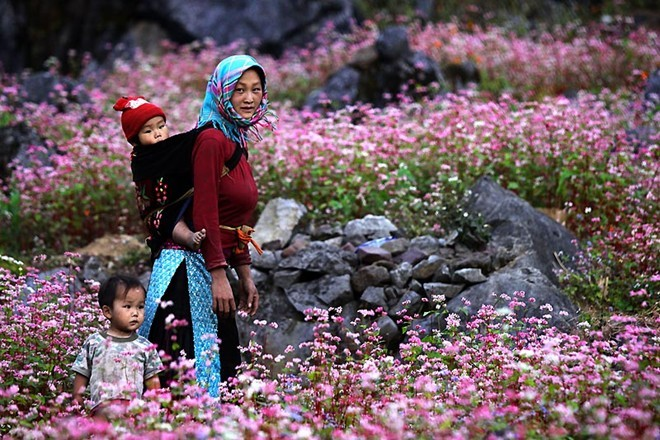 Du lịch trong nước đầy ý nghĩa bên những cánh đồng hoa bạt ngàn