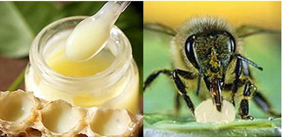 Image result for cách dùng sữa ong chúa