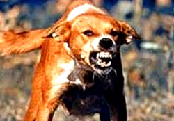 Chó dại