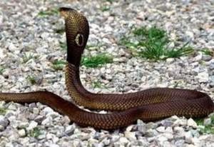 Con rắn