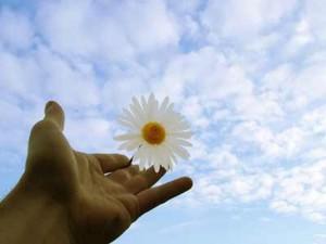 flower10-874892-1368439283_600x0