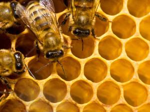 Sáp ong vàng