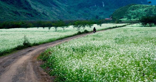 4 địa điểm du lịch trong nước Tết Ất Mùi 'hot' nhất