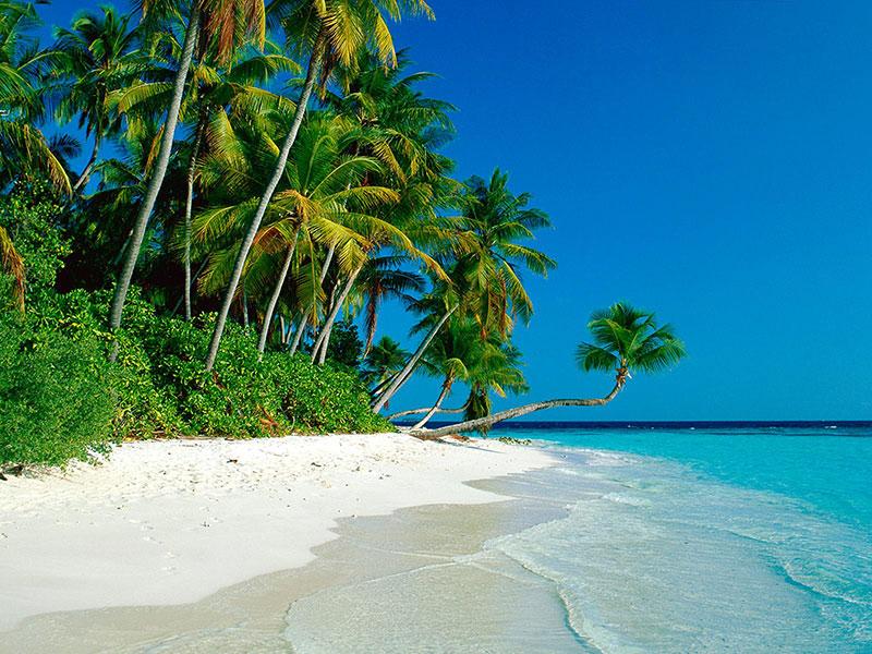 biển canh cát trắng