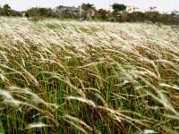Bí quyết trị nám da bằng các loại cây cỏ mọc hoang