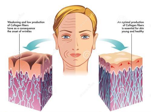 collagen nhật bản