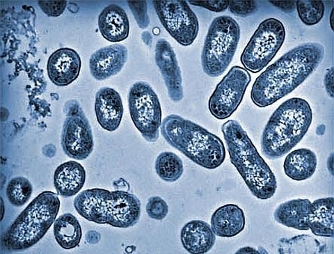 Salmonella[1]