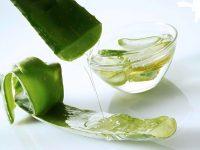 2 công thức trị sẹo với nha đam và dầu dừa