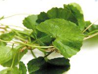 4 loại rau giúp điều trị nám da đơn giản