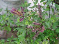 3 loại lá cây có tác dụng trị mụn an toàn
