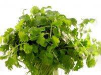 Bài thuốc Đông y hiệu quả từ rau mùi