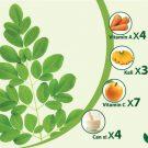 Những lợi ích và công dụng mà cây chùm ngây mang lại