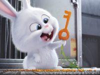 Rút ra 3 bài học đáng nhớ của film hoạt hình 'Đẳng cấp thú cưng'