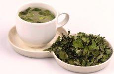 Hướng dẫn cách làm trà chùm ngây đơn giản tại nhà