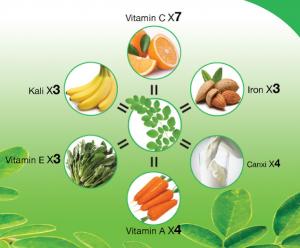 Giá trị dinh dưỡng của cây chùm ngây