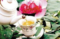 Mách bạn cách giảm cân bằng trà lá sen hiệu quả sau 1 tuần