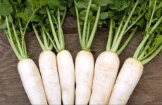 """Nước củ cải trắng – """"thần dược"""" trong chăm sóc sức khỏe và làn da"""