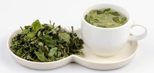 Uống trà chùm ngây hàng ngày giúp bảo vệ sức khỏe