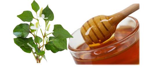 Bài thuốc trị mụn từ rau diếp cá và mật ong