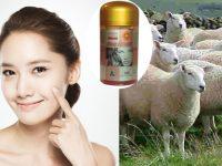 Cách sử dụng nhau thai cừu trị nám, tàn nhang