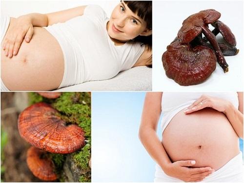 Nấm linh chi tốt cho sức khỏe mẹ bầu