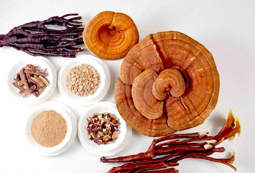Bài thuốc từ nấm linh chi hiệu quả