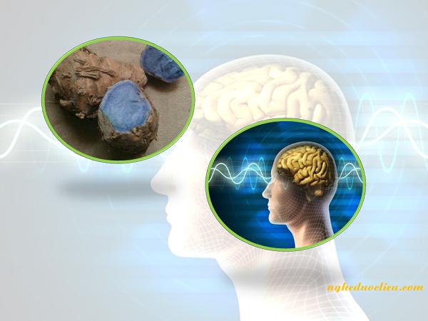 nghệ đen có thể bảo vệ não