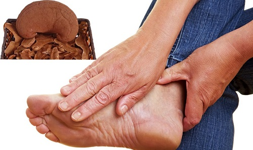 Nấm linh chi chữa bệnh Gout