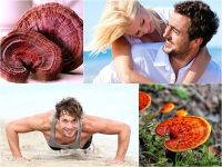 Dùng nấm linh chi thường xuyên giúp nam giới có sức khỏe tốt