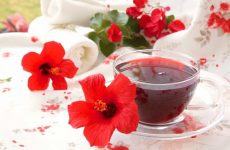 Trà nấm linh chi hoa dâm bụt