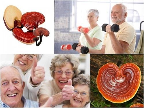 Nấm linh chi có nhiều công dụng đối với sức khỏe