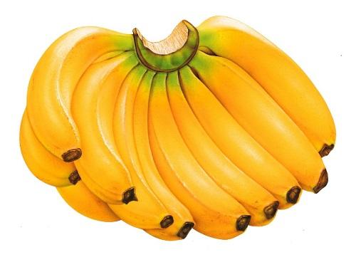 Chuối tiêu là một trong những trái cây giúp giảm cân sau sinh