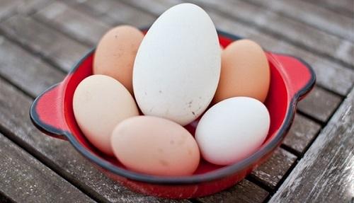 Bổ sung trứng đúng cách