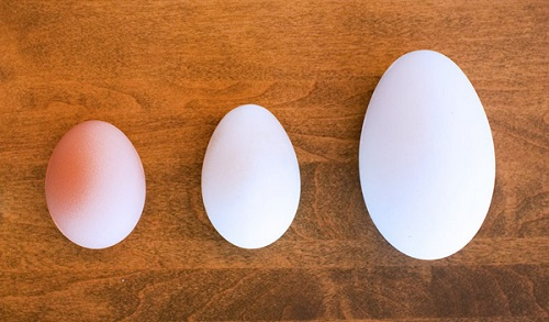Trứng gà vịt ngỗng
