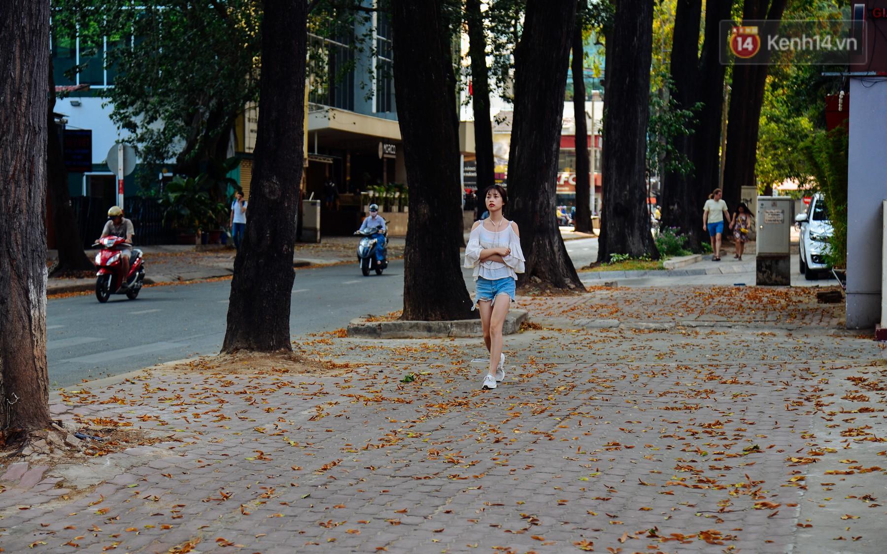 """Sài Gòn, có một mùa Chò rơi """"quyến rũ"""" đến thế 1"""