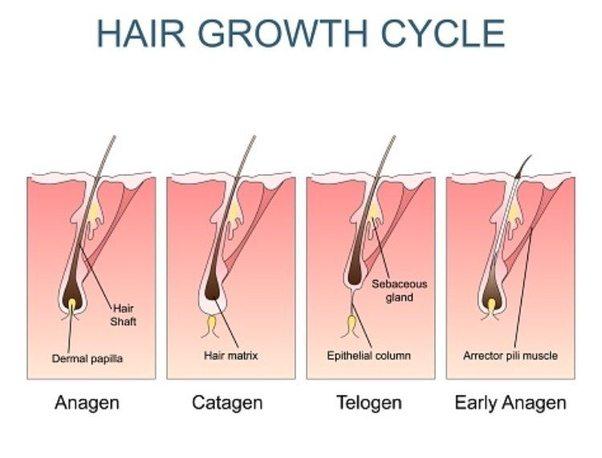 Tóc rụng nhiều phải làm sao đây?