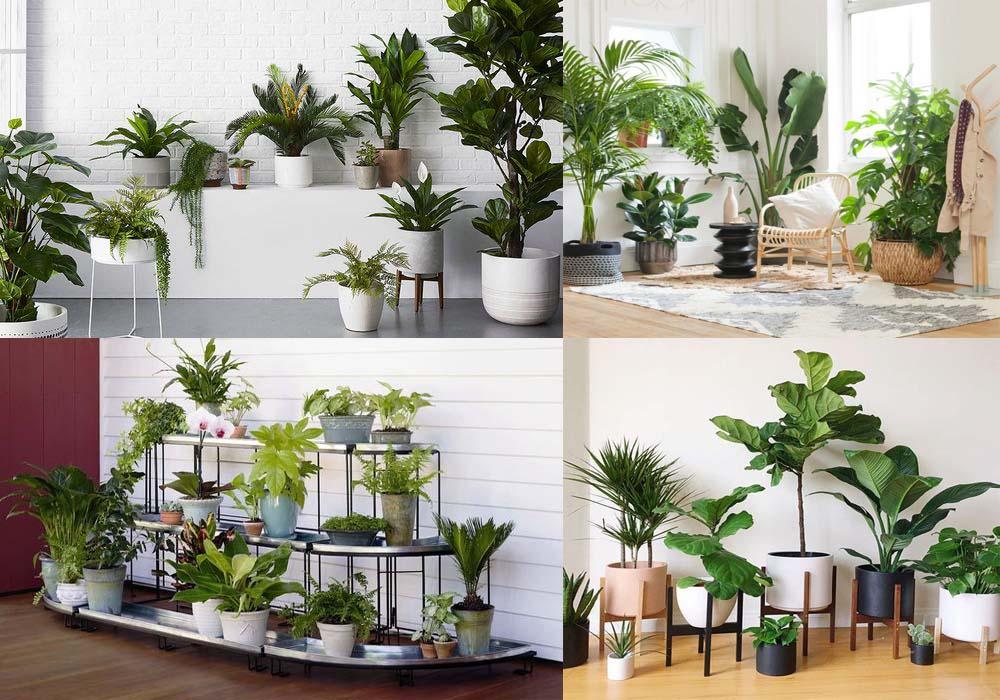 Tác dụng của một số loại cây cảnh trồng trong nhà