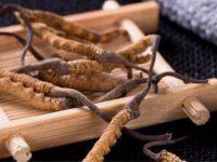 Tác dụng của đông trùng hạ thảo đối với việc chống lão hóa ở phụ nữ